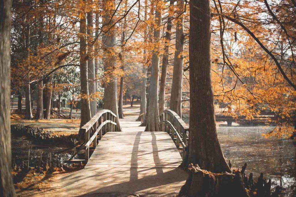 美しい公園