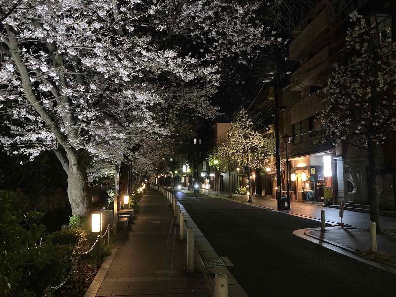 京都 木屋町 夜桜